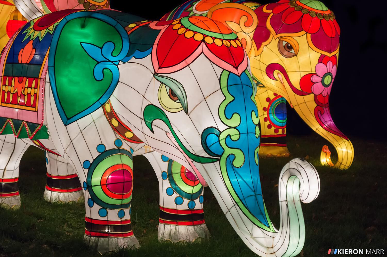 Longleat Festival of Light 2014 - Illuminated Elephants