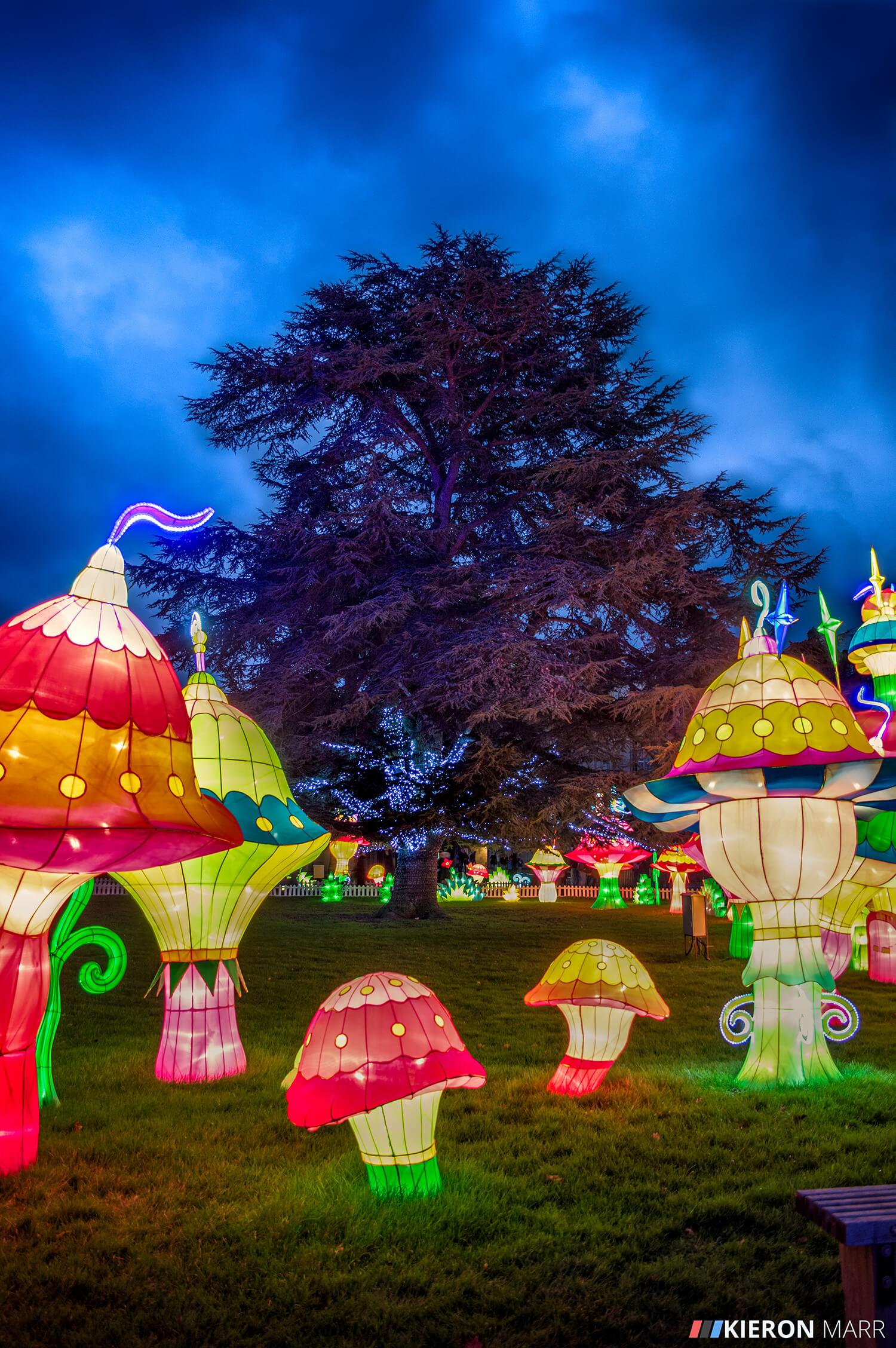Longleat Festival of Light 2014 - Colourful Mushroom Garden