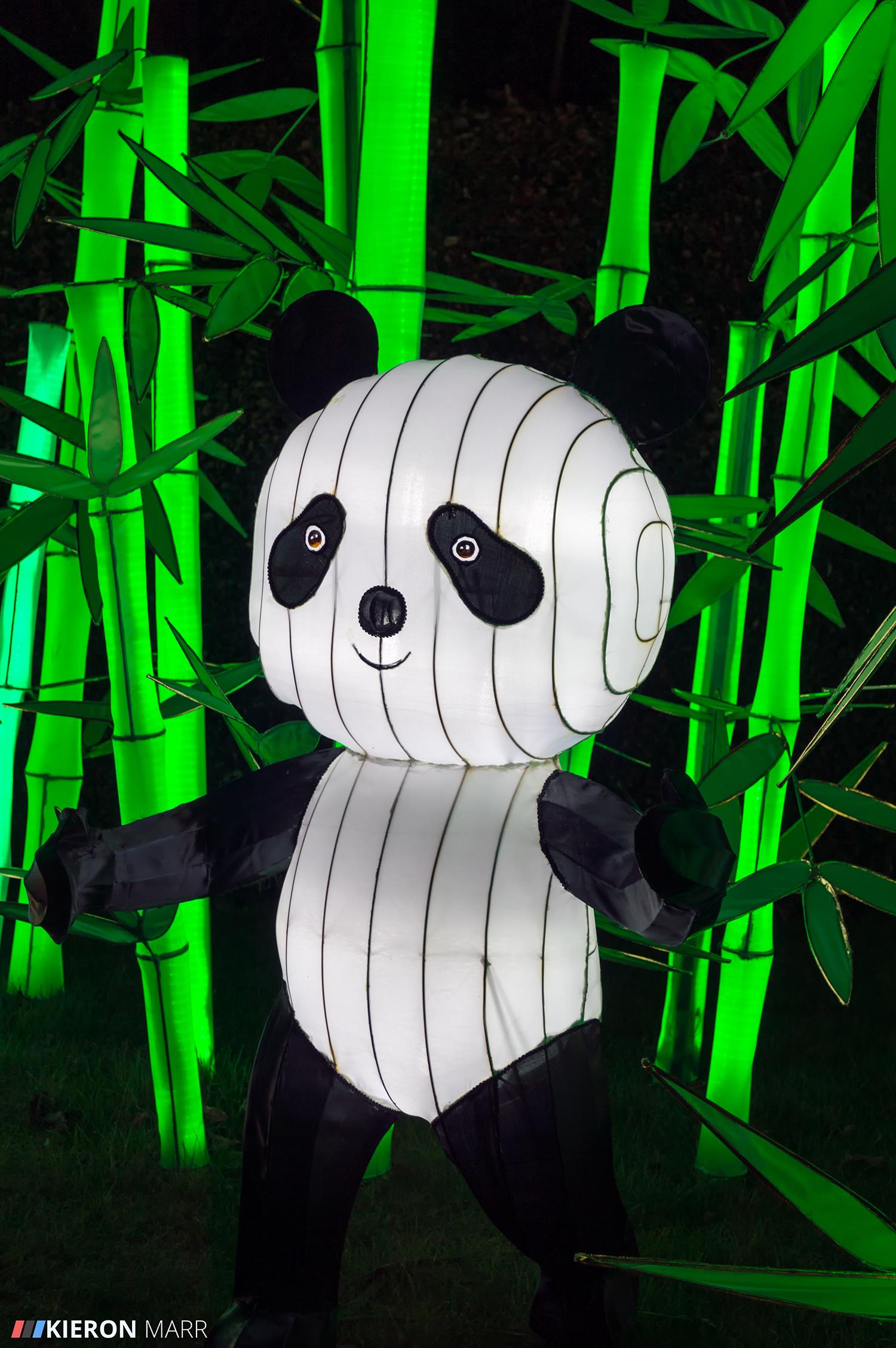 Longleat Festival of Light 2014 - Panda Garden