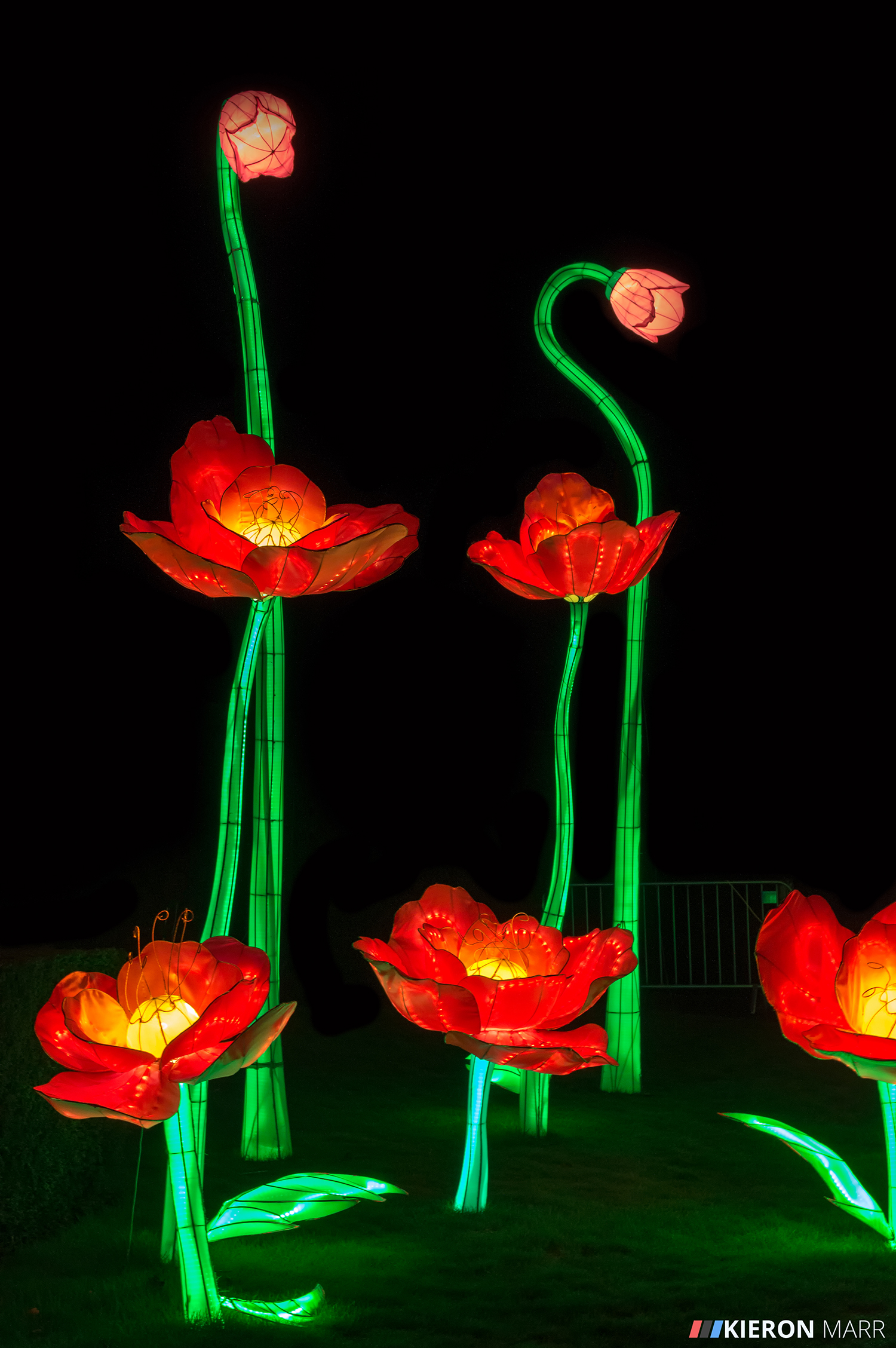 Longleat Festival of Light 2014 - Flowers