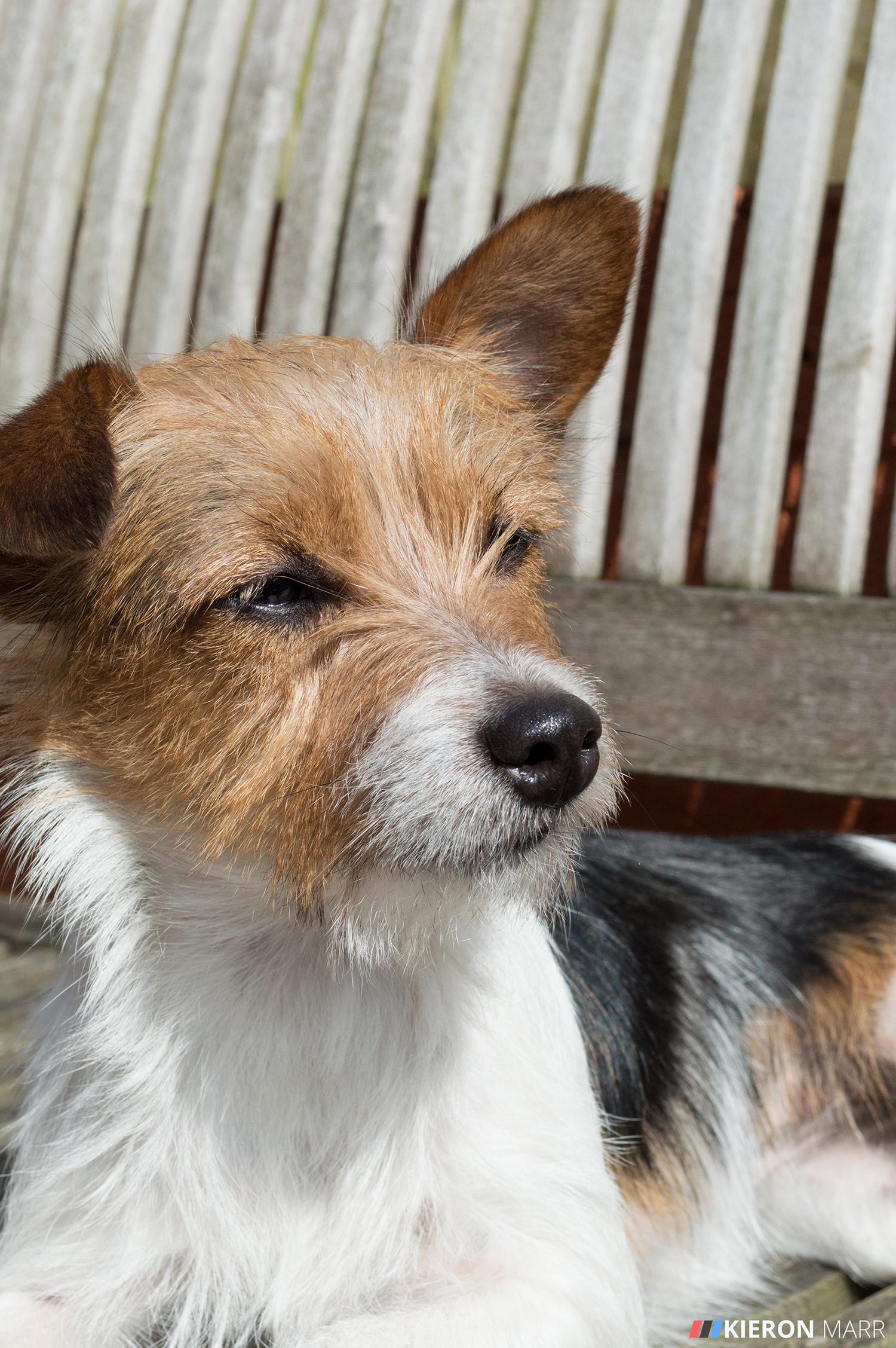 Maisie sunbathing on a bench