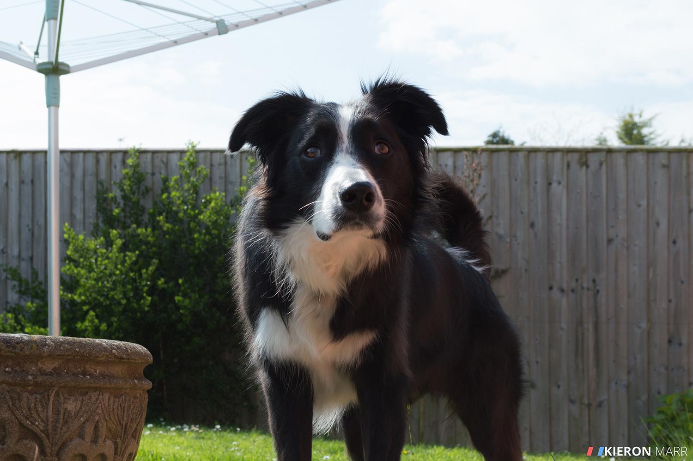 Oscar waiting for his ball