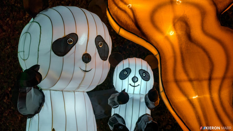 Longleat Festival of Light 2014 - Panda Family