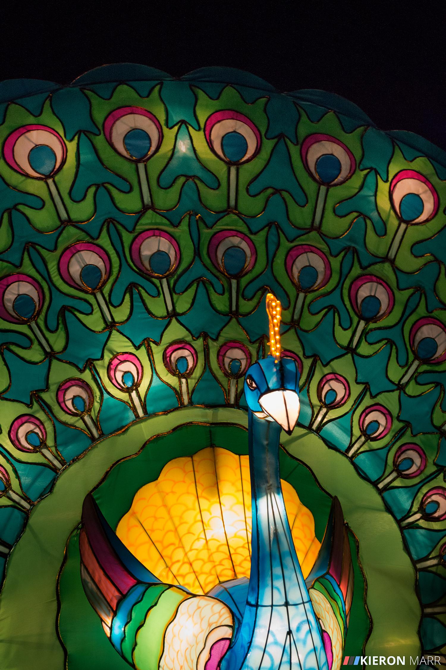 Longleat Festival of Light 2014 - Peacock