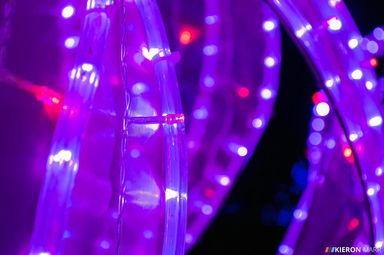 Longleat Festival of Light 2014 - Purple Flowers Macro