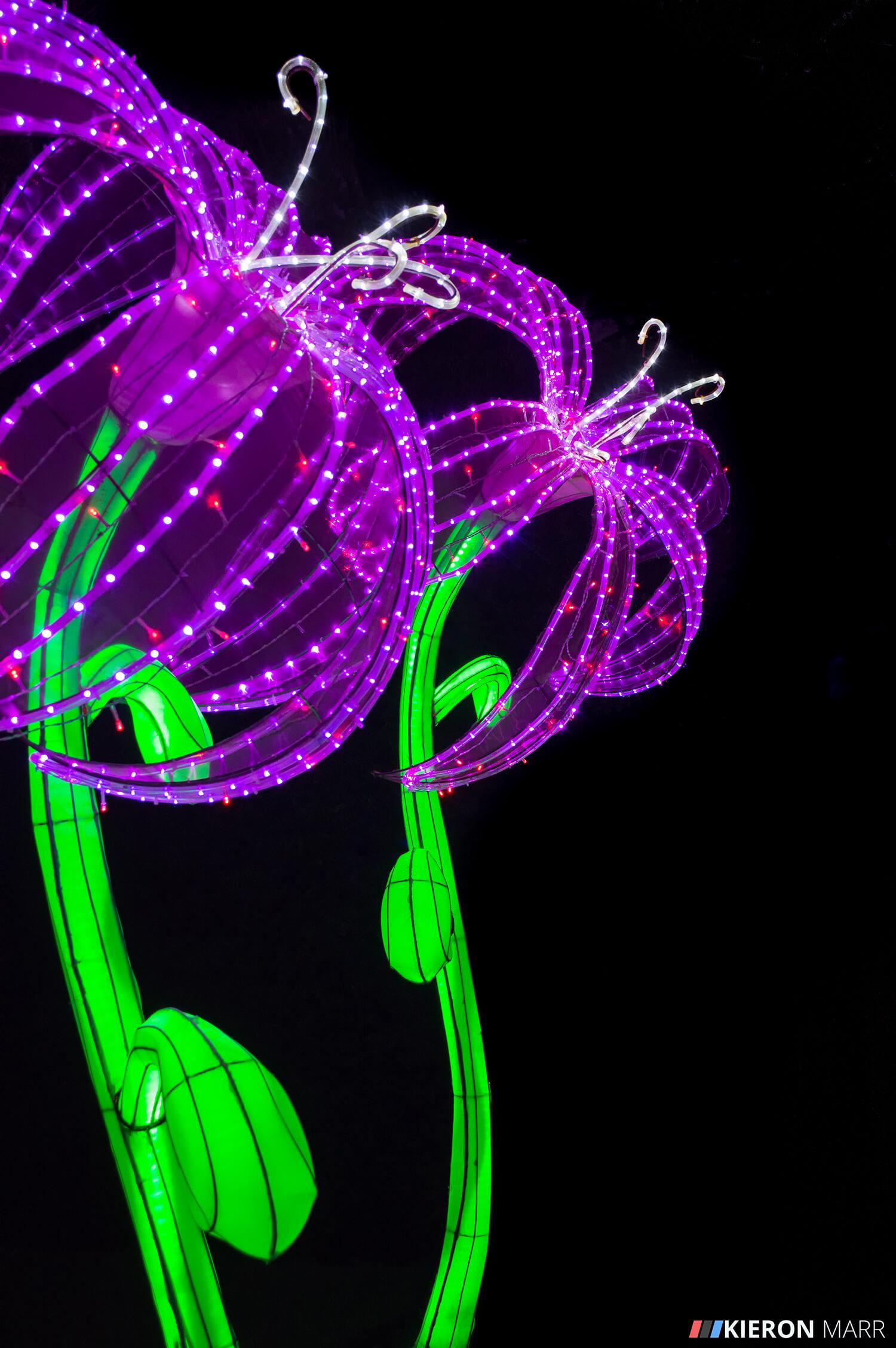 Longleat Festival of Light 2014 - Purple Flowers