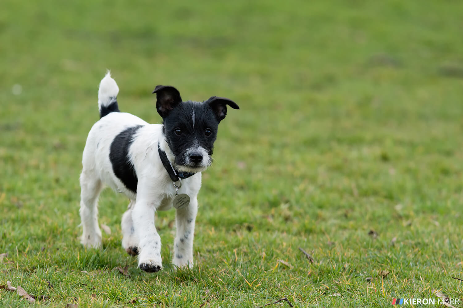 Stan the Jack Russell curious